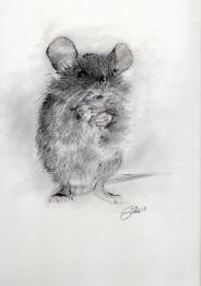 Mr Mouse - graphite and ink