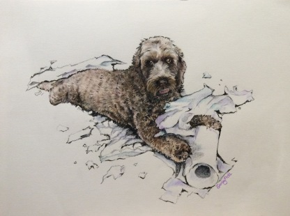 Labradoodle - prismacolour Pencil
